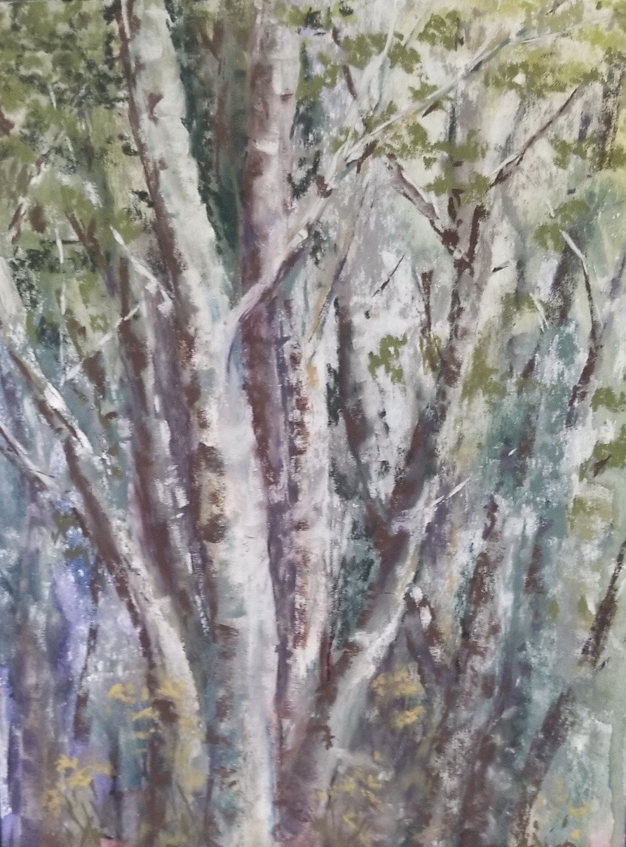 Birches by Jessica Disbrow