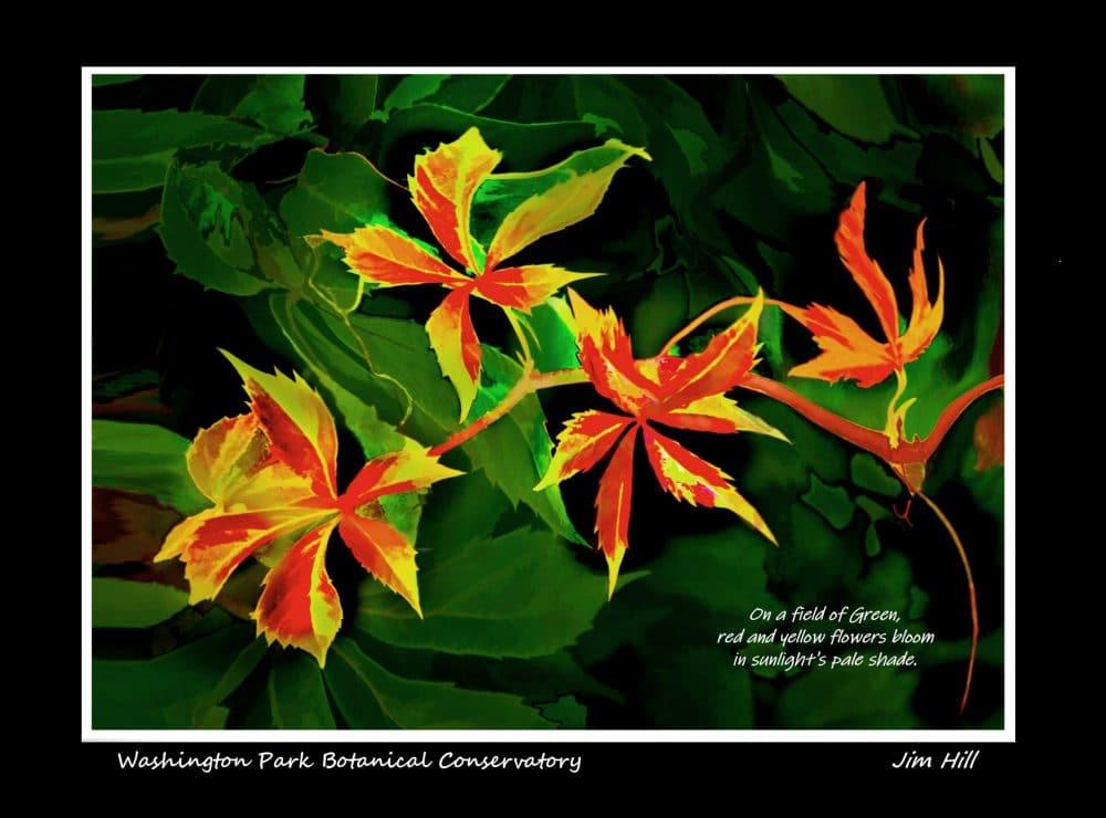 Botanical Conservatory 3a by Jim Hill