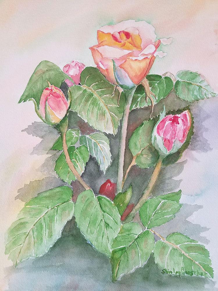 Portland Roses by Shirley Buescher