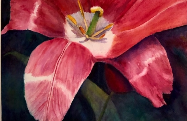 Rembrandt Tulip by RaeNell Spencer