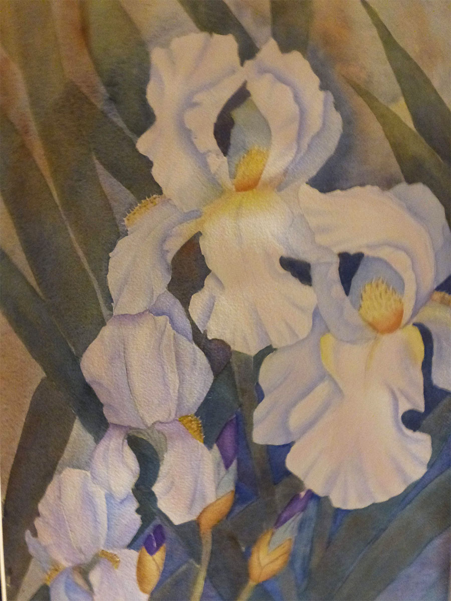 White Iris by Shirley Buescher