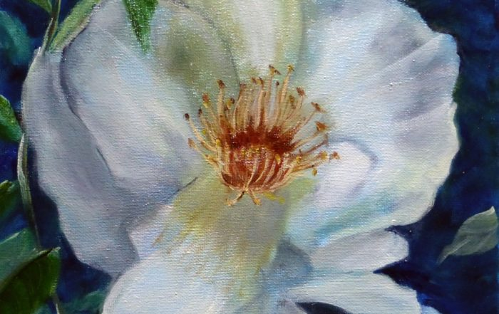 White Rose by Shirley Buescher
