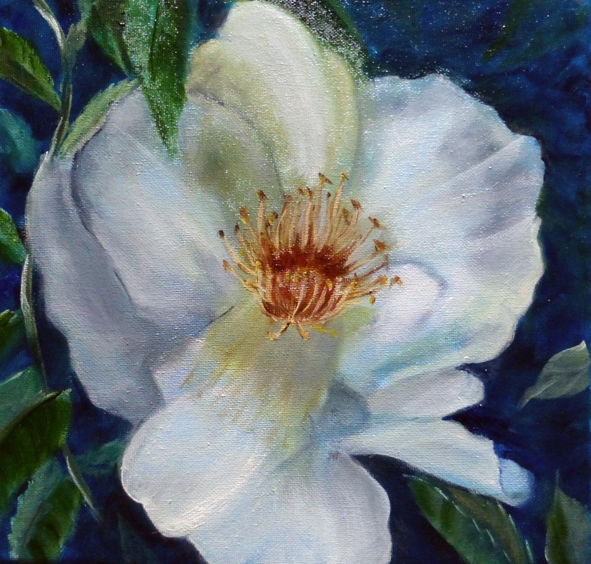 White Rose by Shirley Buescher